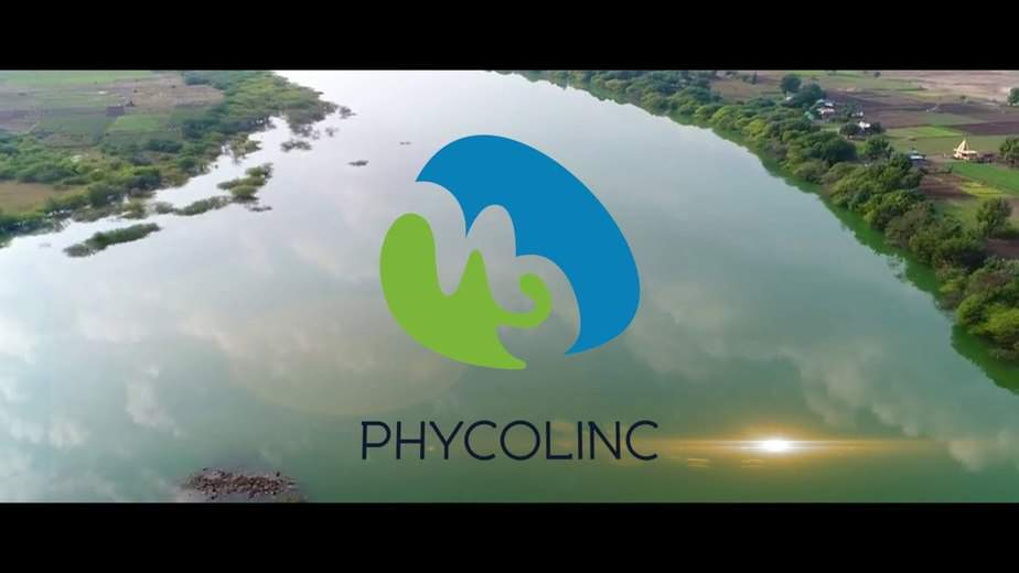 phycolnic