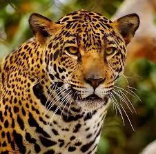 Jambughoda wildlife Sanctuary