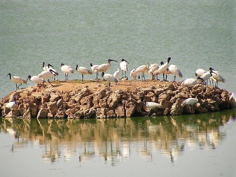 Porbandar Bird Sanctuary